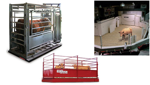 Midwest Weighing Systems Livestock Scales Scale Animal